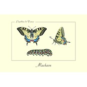 Carte Postale simple 10 X 15 cm Machaon