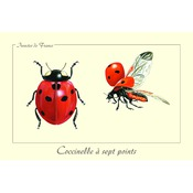 Carte Postale simple 10 X 15 cm Coccinelle à 7 points