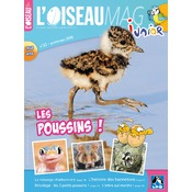 L'Oiseau Magazine Junior n°22