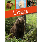 L'ours, collection portraits sauvages