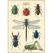 Affiche Vintage Natural History of Insects