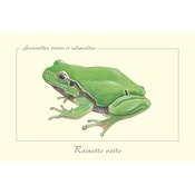 Carte Postale simple 10 x 15 cm Rainette verte