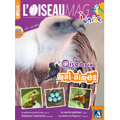 L'Oiseau Magazine Junior n°27