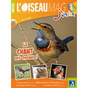 L'Oiseau Magazine Junior n°19