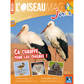 L'Oiseau Magazine Junior n°20