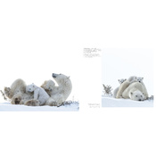 Wapusk, Ours Polaires