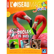 L'Oiseau Magazine Junior N°3