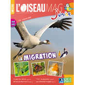 L'Oiseau Magazine Junior n°8
