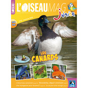 L'Oiseau Magazine Junior n°12