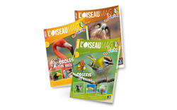 Oiseau Magazine Junior