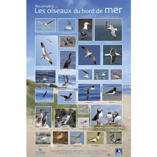 poster reconna tre les oiseaux de mer posters lpo boutique lpo ensemble pr servons la nature. Black Bedroom Furniture Sets. Home Design Ideas